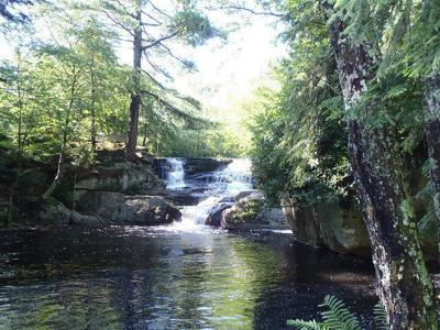 pinchot_state_forest