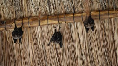 US-NEWS-CORONAVIRUS-BATS-DMT