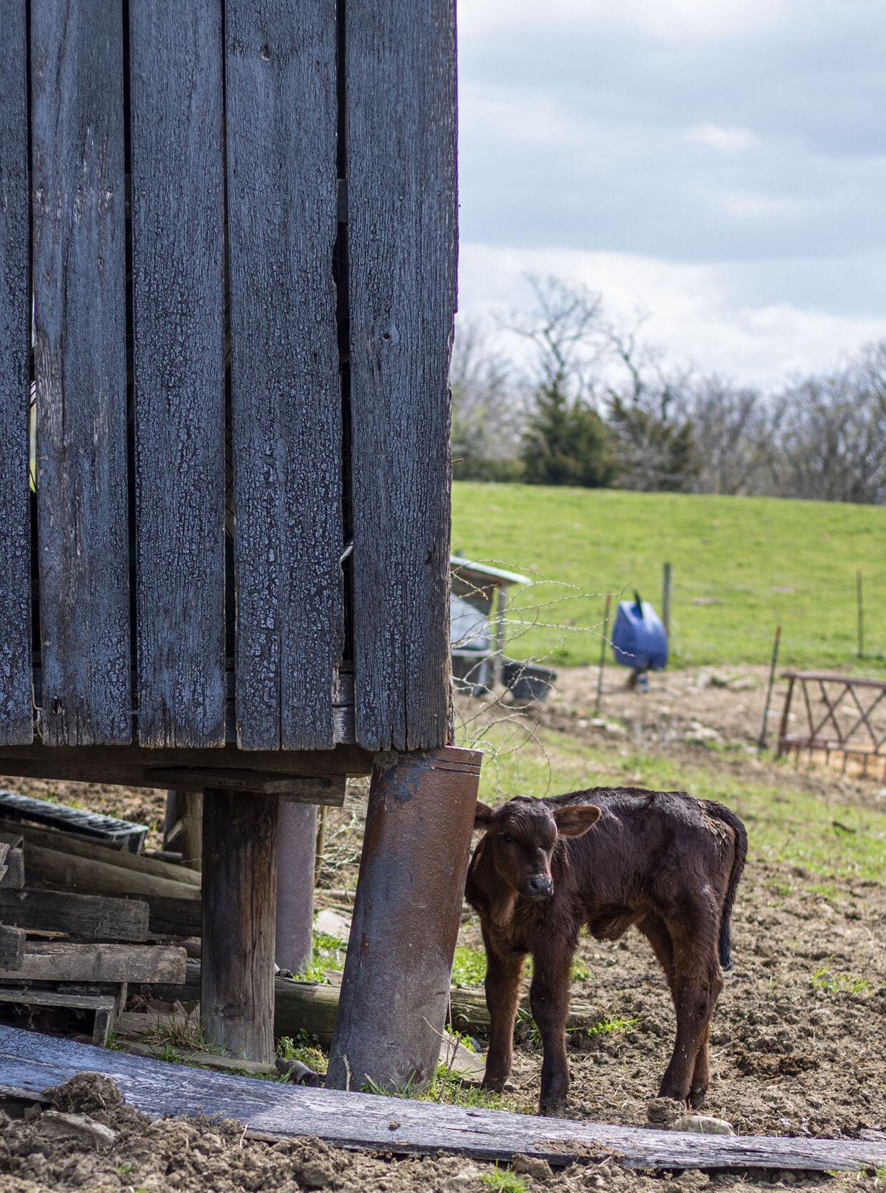 Arnett Family Farms