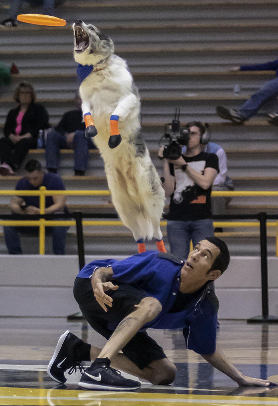 The Flying Houndz Frizbee