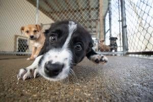 STAR of Rowan Rescues Neglected Animals