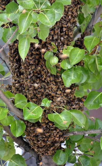 SWARM! BEES ARE COMING