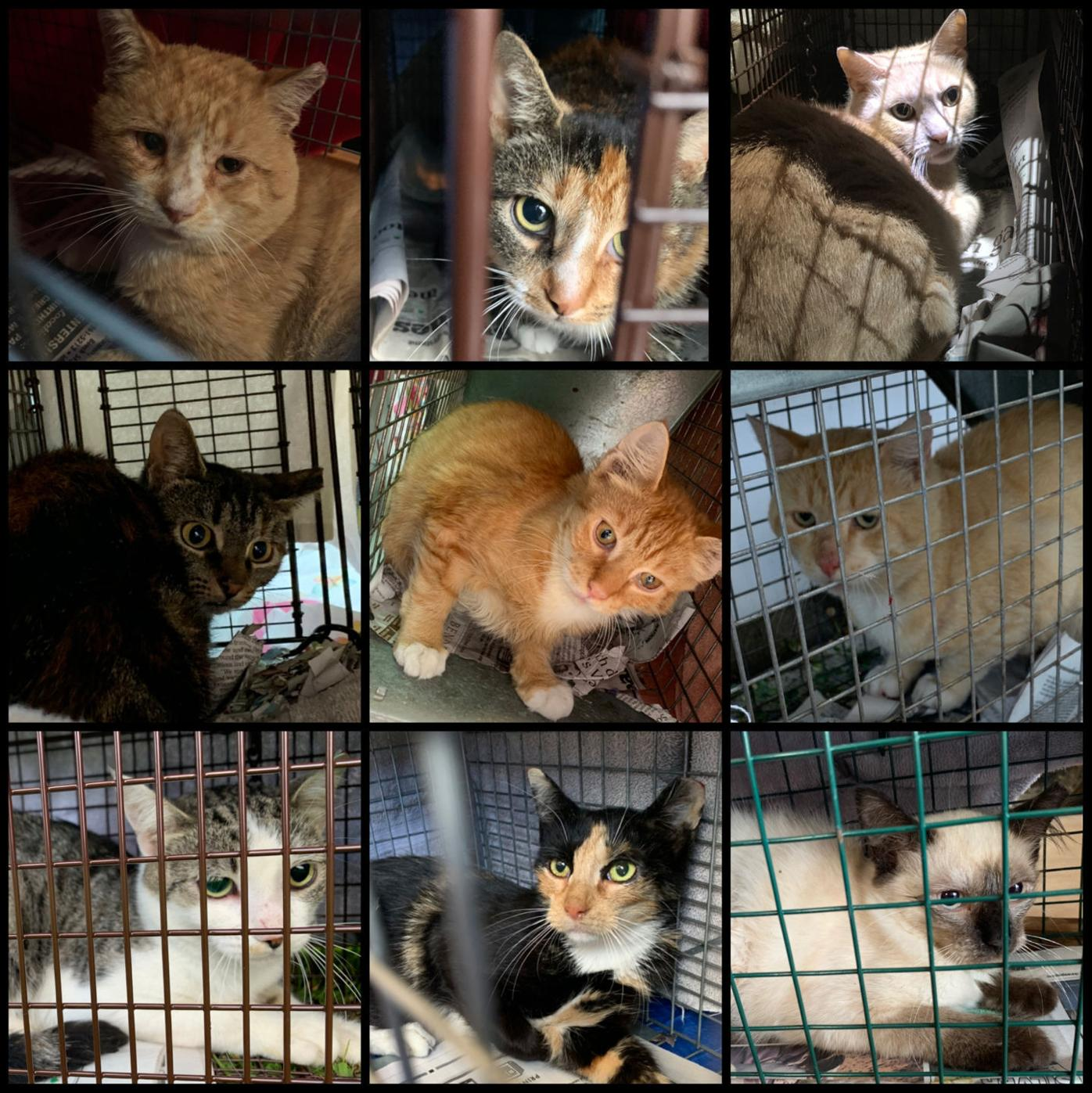 Animal lovers get financial boost to help cats in Jessup