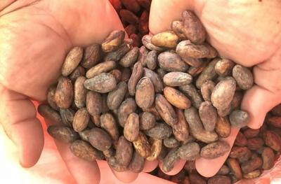 cocoa.jpg