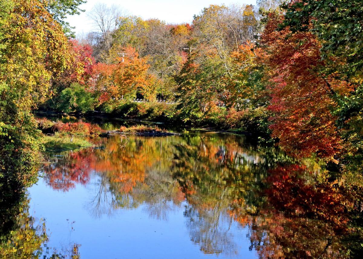 WES Autmn color on river 11697.JPG
