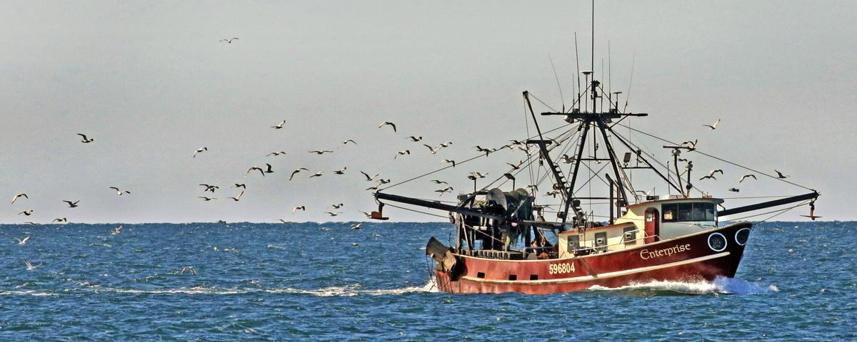 051221 WES Fishing boat with sea gulls hh 46755.JPG