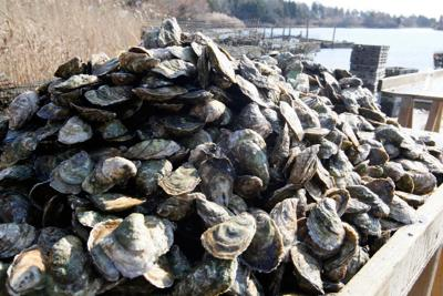 New Rhode Island plan for shellfish is well-received