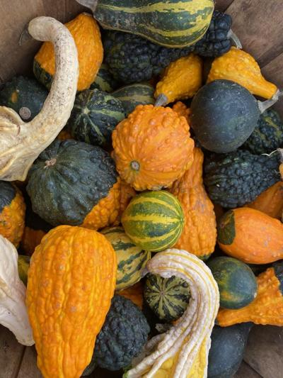 gourds 2.jpg