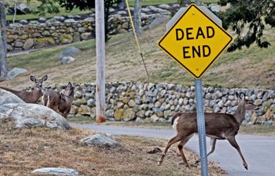 020420 Wes Deer in Watch Hill 700.JPG