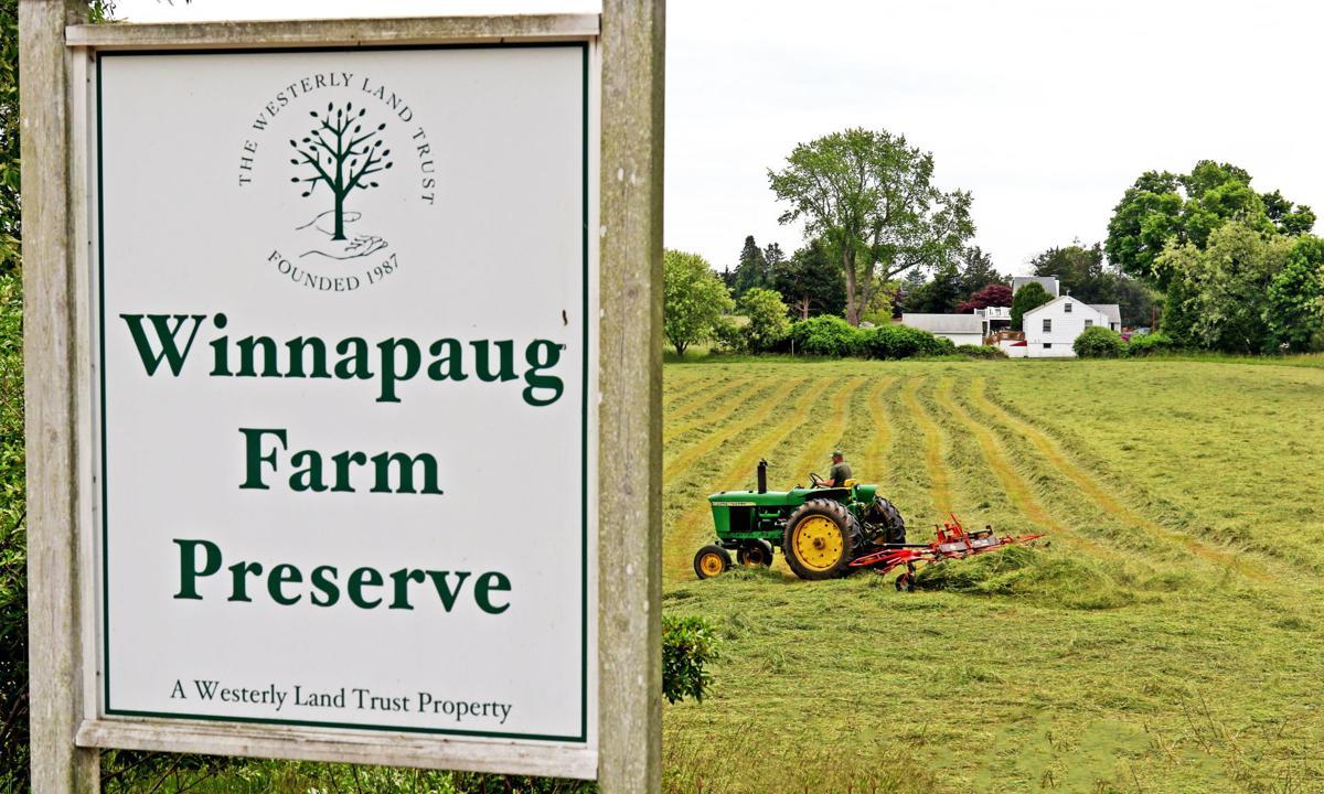 060719 WES Haying at Winnapaug Farm Preserve 233.JPG