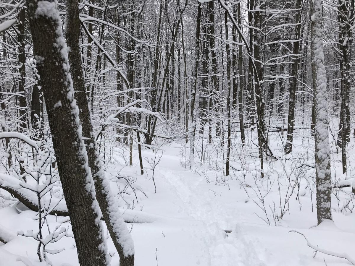 REGvaluingforests-WS-020921 01.jpg