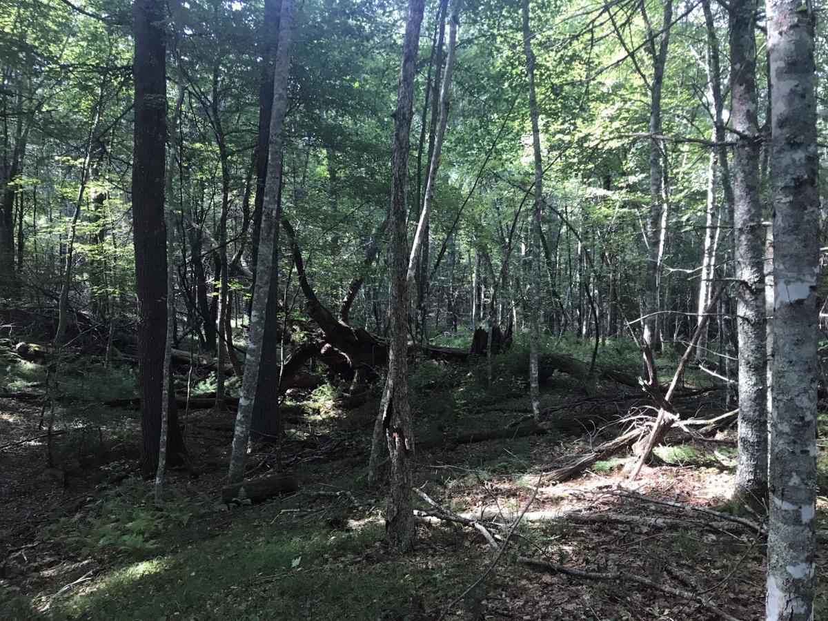 REGvaluingforests-WS-020921 02.jpg