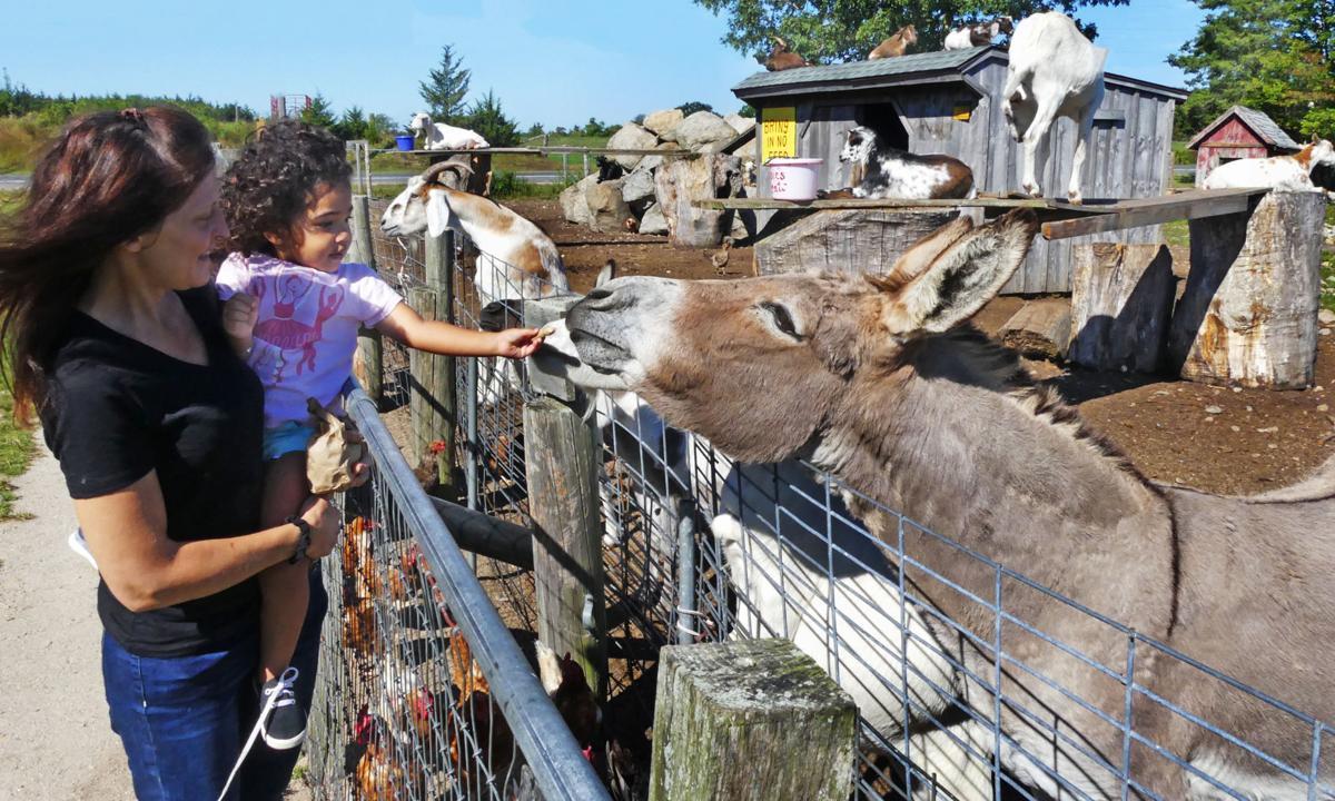 091719 WES Feeding animals at Manfredi Farms 918.JPG