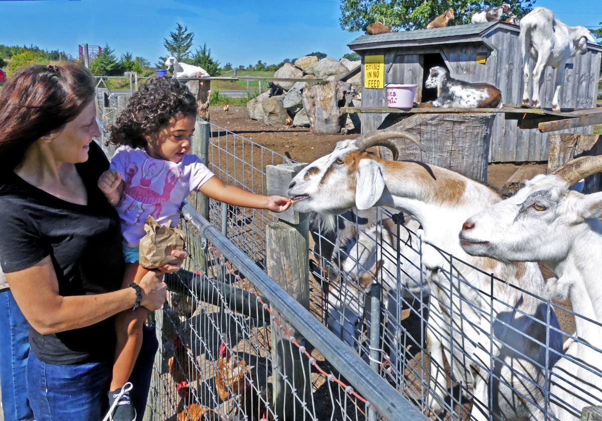 091719 WES Feeding animals at Manfredi Farms 921.JPG
