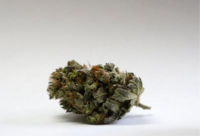 standing marijuana