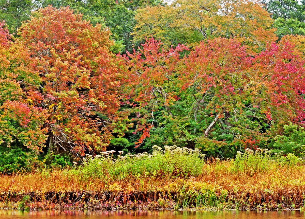 100319 ASH Autumn color along river 1154.JPG