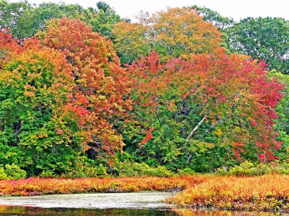 100319 ASH Autumn color along river 1156.JPG