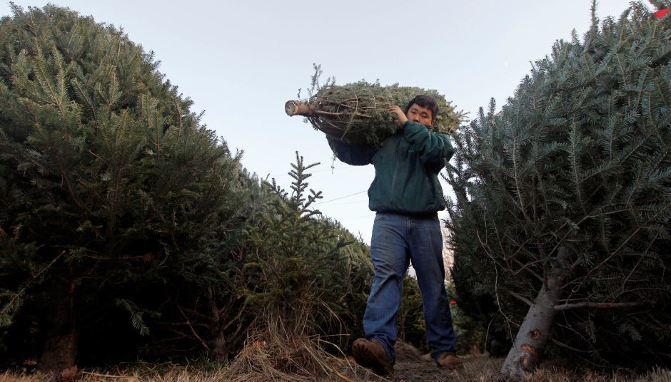 It may be harder this year to find the perfect Christmas tree