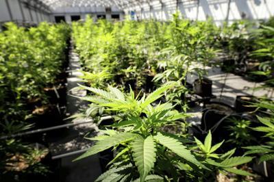 Marijuana Social Justice