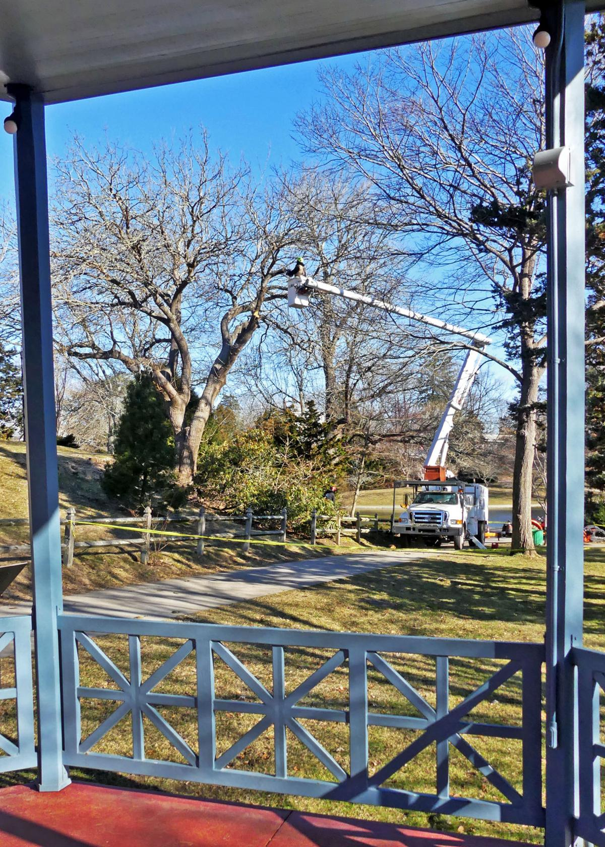 021920 WES Mulberry tree cut down Wilcox Park 547.JPG