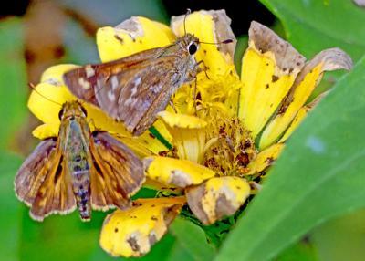 091921 WES Garden pollinators hh 83673.JPG