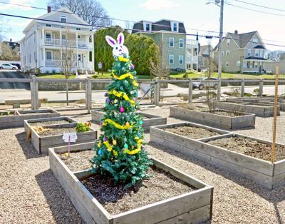 032921 WES Easter tree in garden hh 35534 copy.jpg