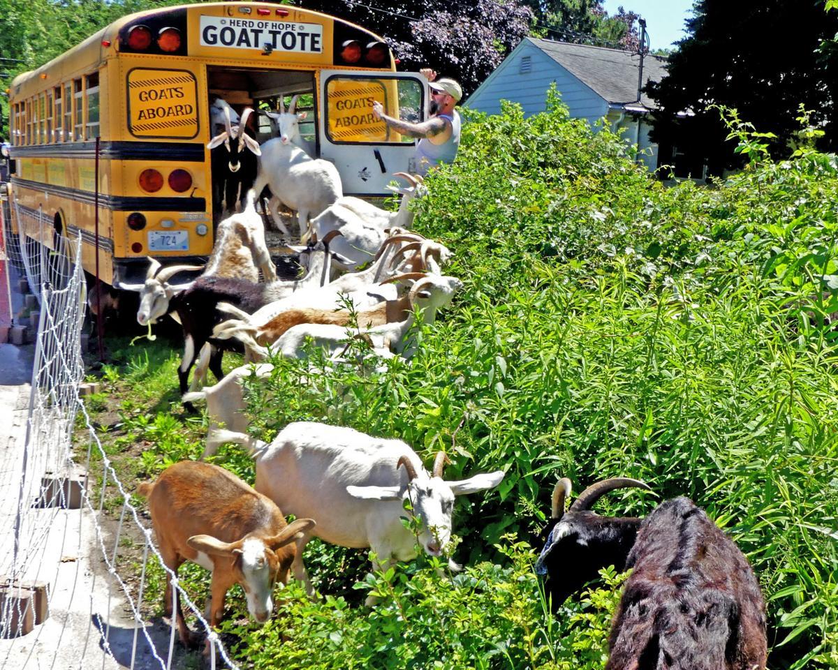 Goat Tote