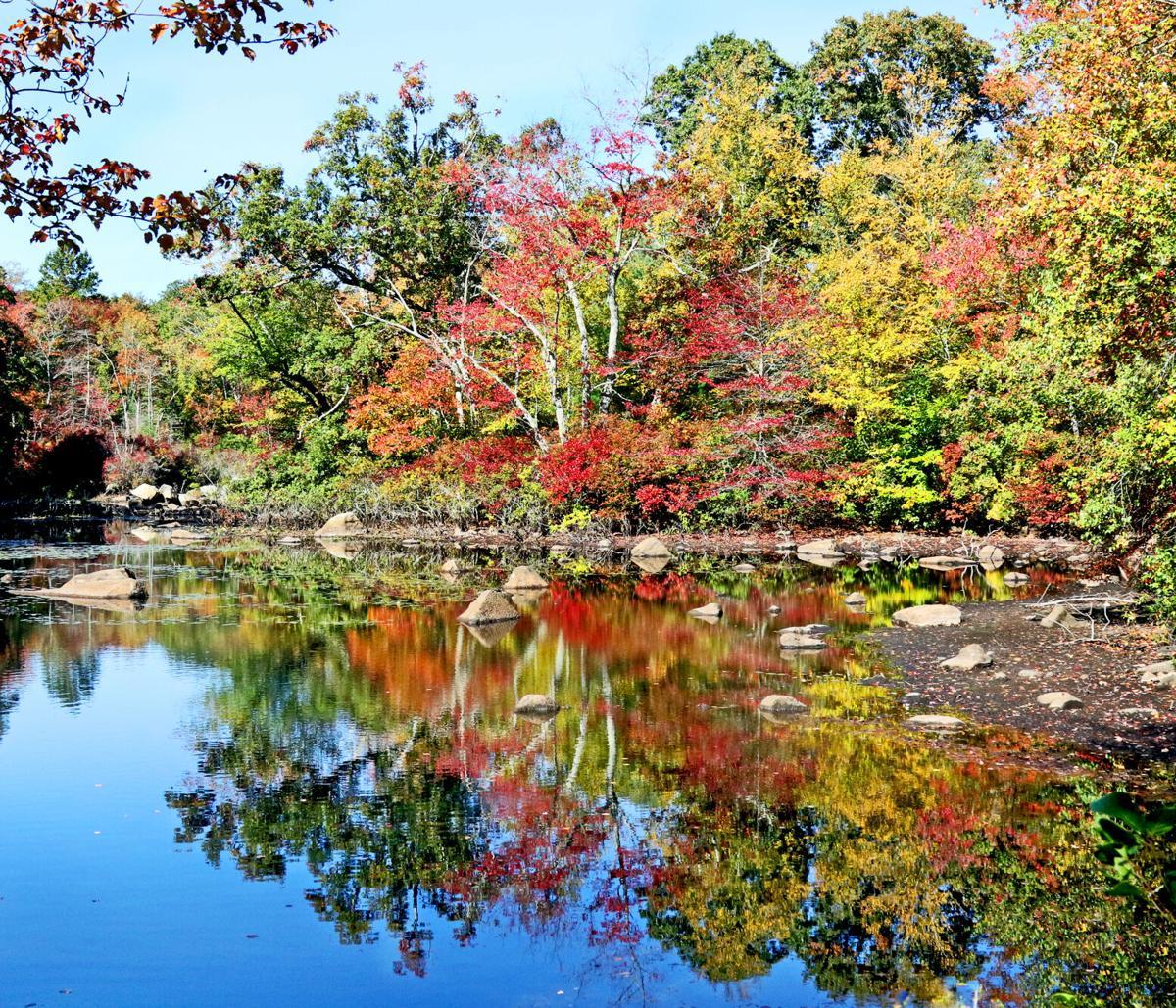 CHR Hope Valley autumn pond scene 11877.JPG