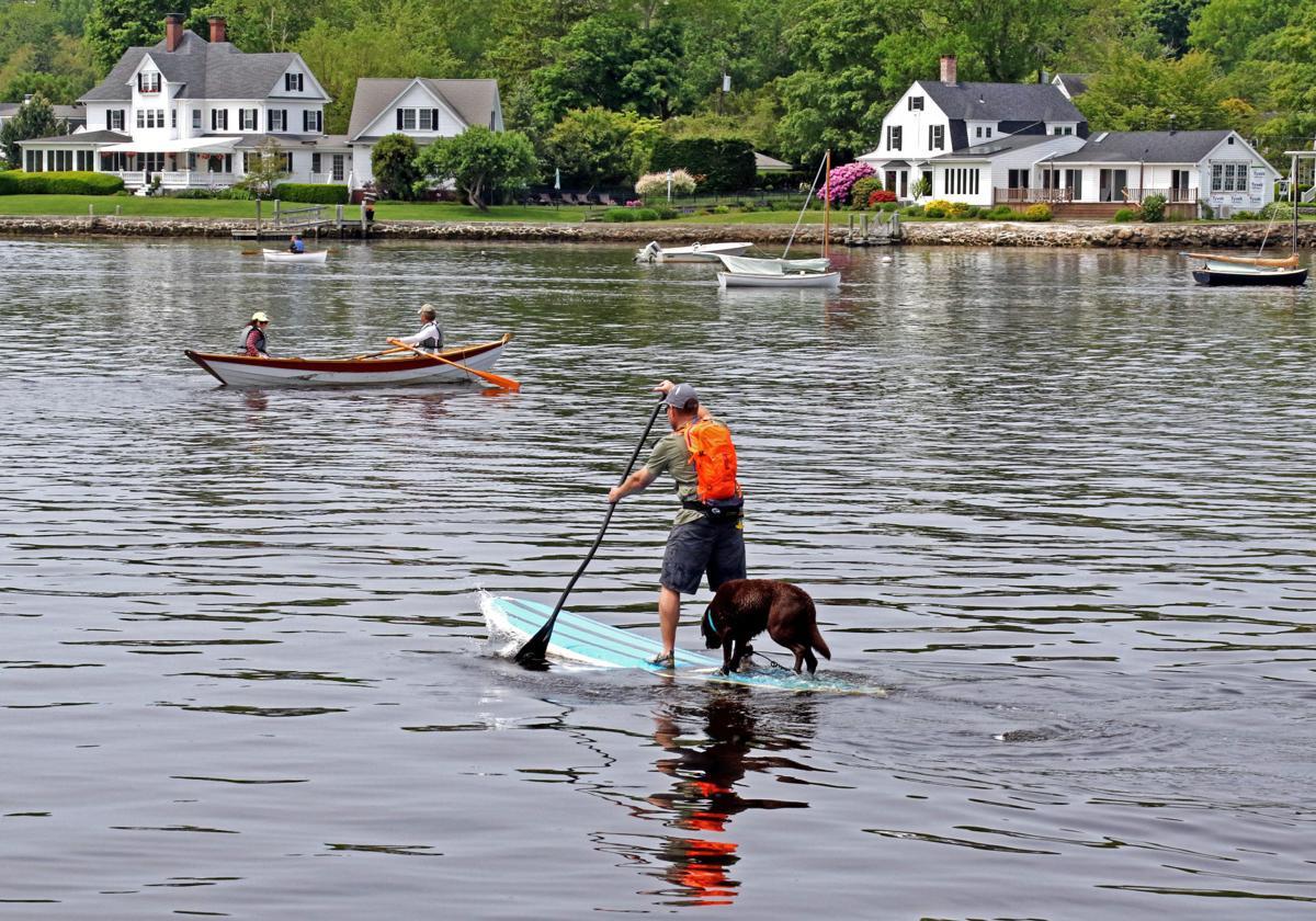 060219 MYS Dog on paddleboard 459.JPG