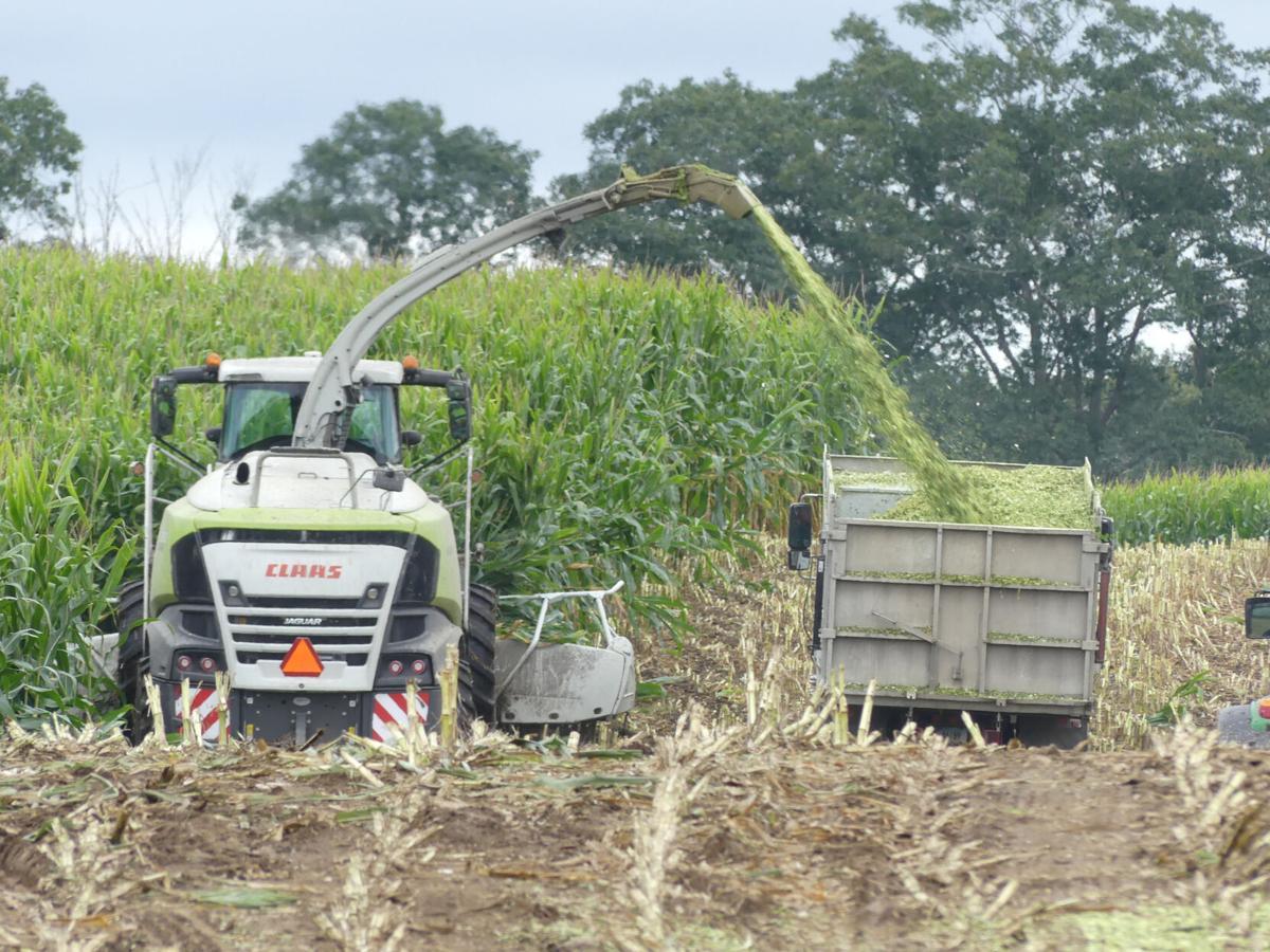 091521 NSTN Beriah Lewis corn harvestor hh 82187.JPG