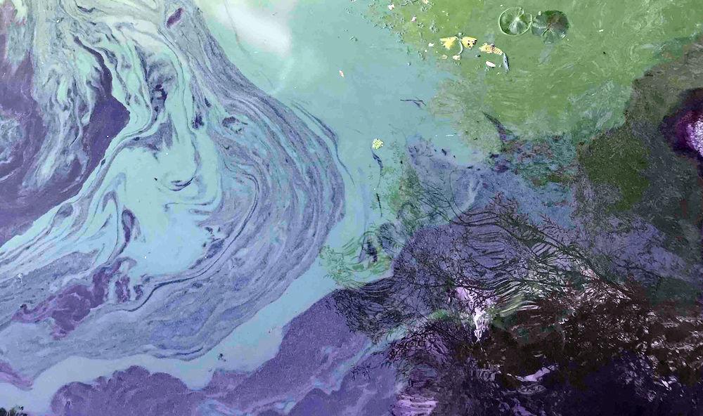 algal bloom.jpg