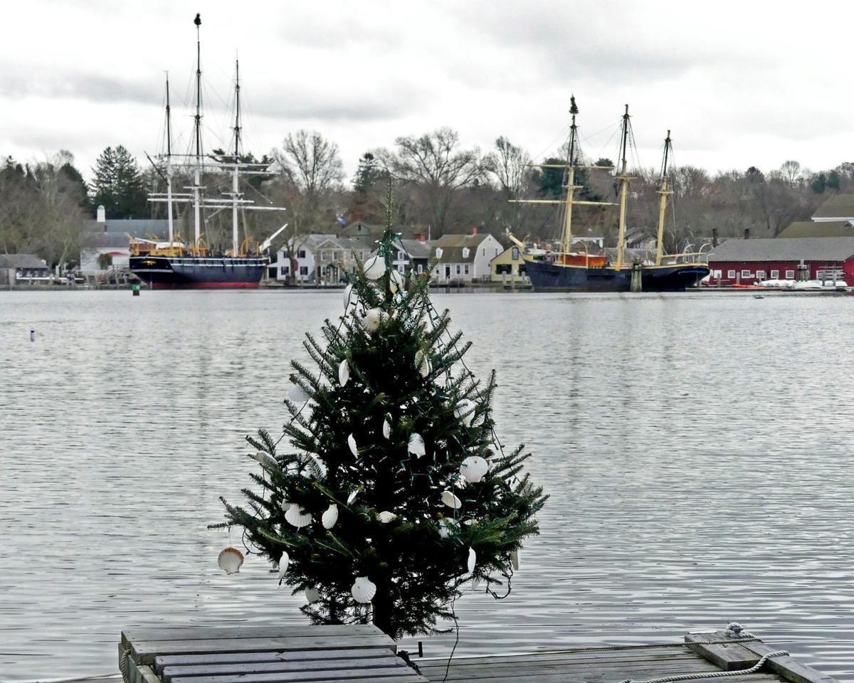 1203 WLD seaport trees 2.jpg