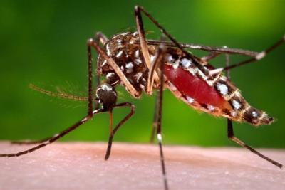 West Nile Virus found in R.I. mosquito test, first of 2016