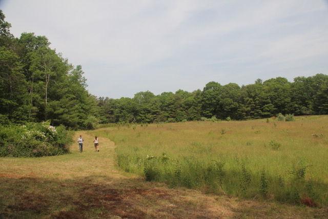 Patricia Sprague Forest Preserve
