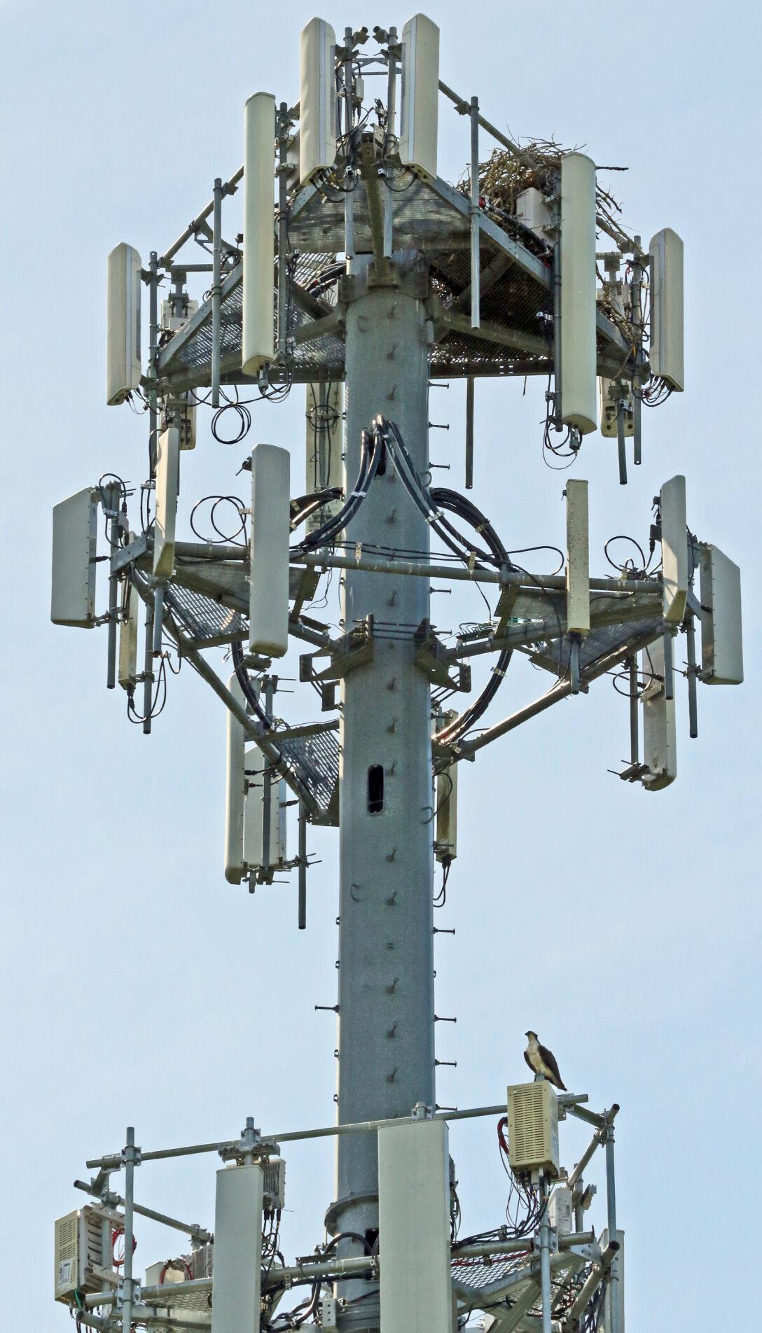 061021 NSTN Osprey nest on tower hh 53243.JPG