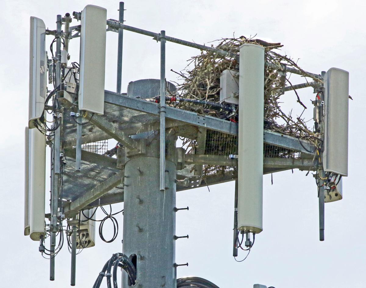 061021 NSTN Osprey nest on tower hh 53245.JPG