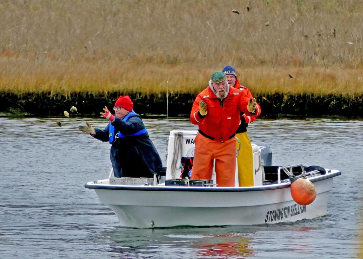 121319 MYS Shellfishing areas seeded 140.JPG