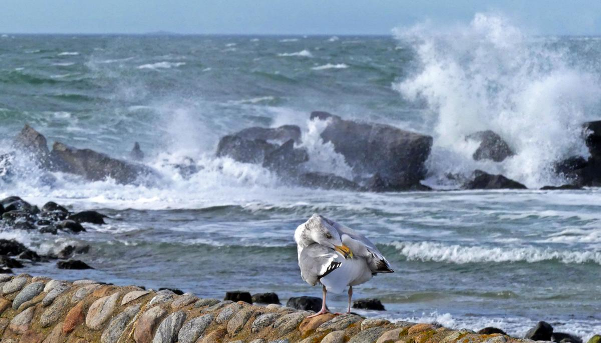 011320 WES Crashing seas and gull WH Light 786.JPG