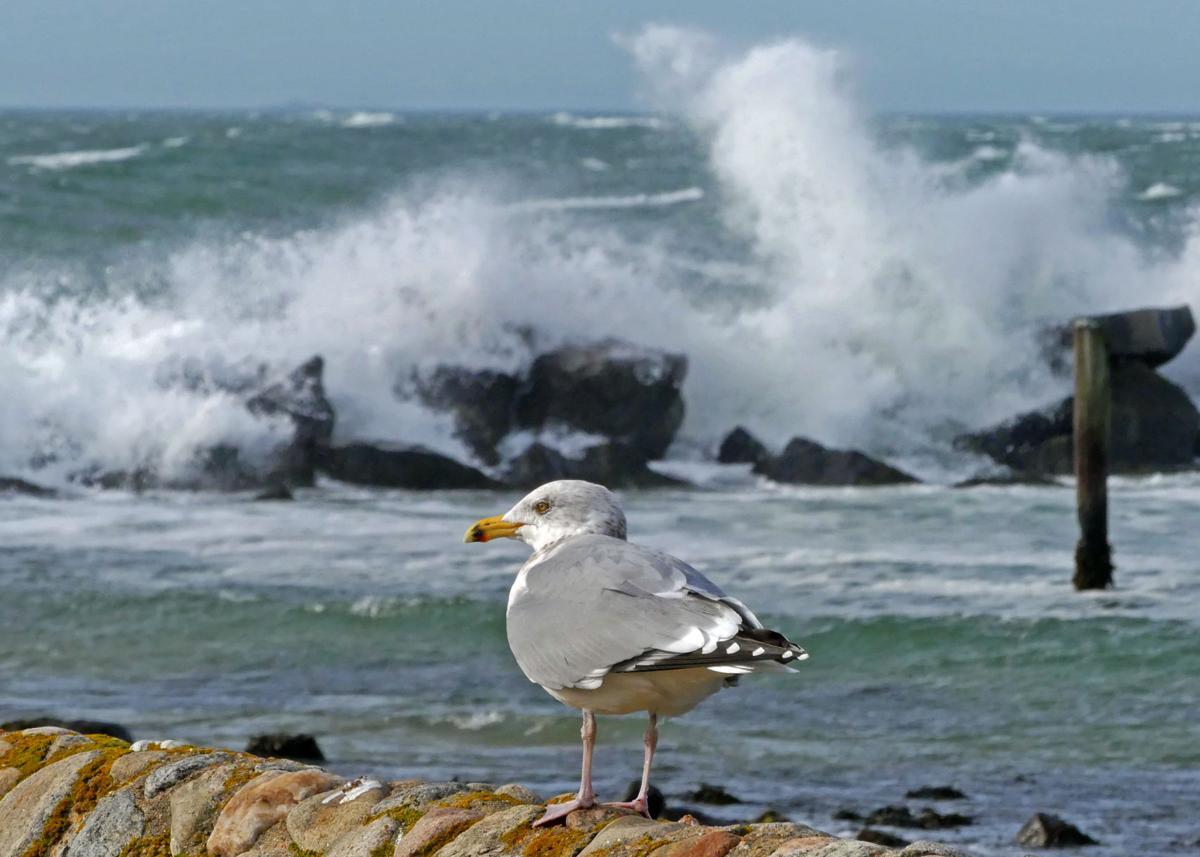 011320 WES Crashing seas and gull WH Light 776.JPG