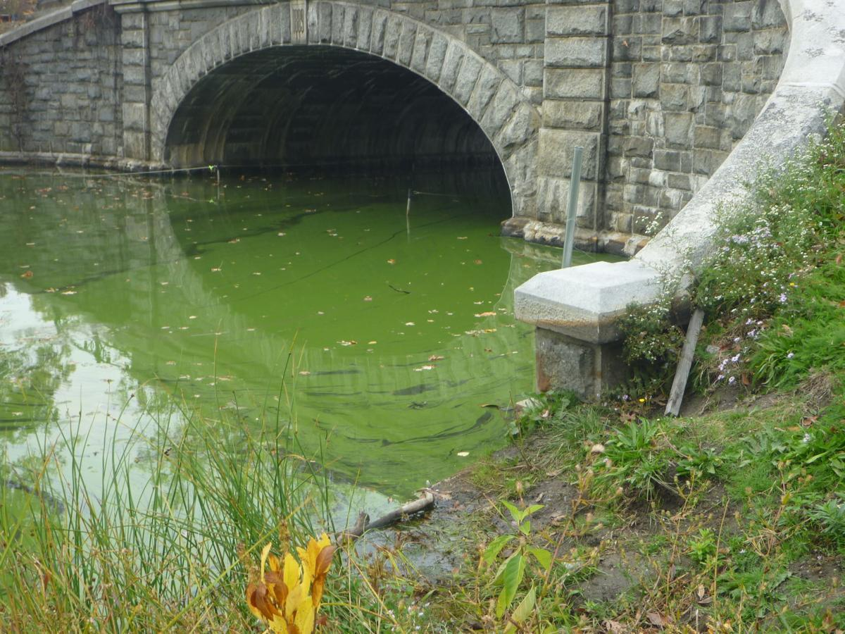 062629 REG algae in ponds submitted by RIDEM (3).JPG