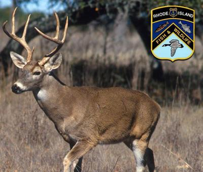 Rhode Island deer hunting permits go on sale Wednesday