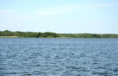 Stonington shellfish areas closed