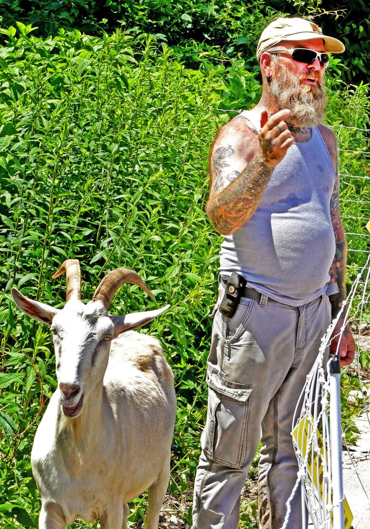 062619 WES Goat scaping Avondale 116.JPG