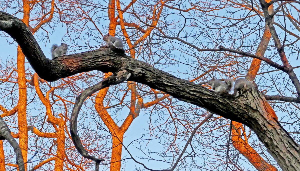 020720 WES Squirrels tree house 942.JPG