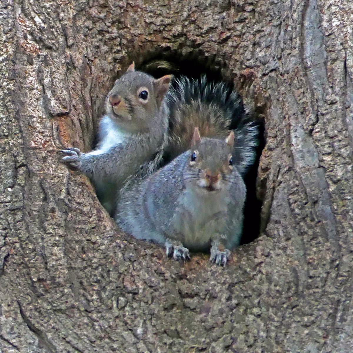 020720 WES Squirrels tree house 943.JPG