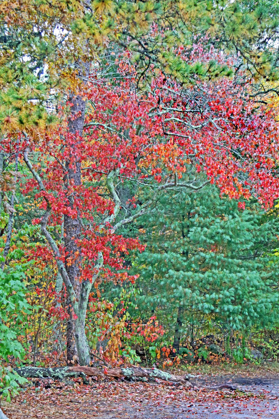 REG Autumnal foilage color 08684.JPG