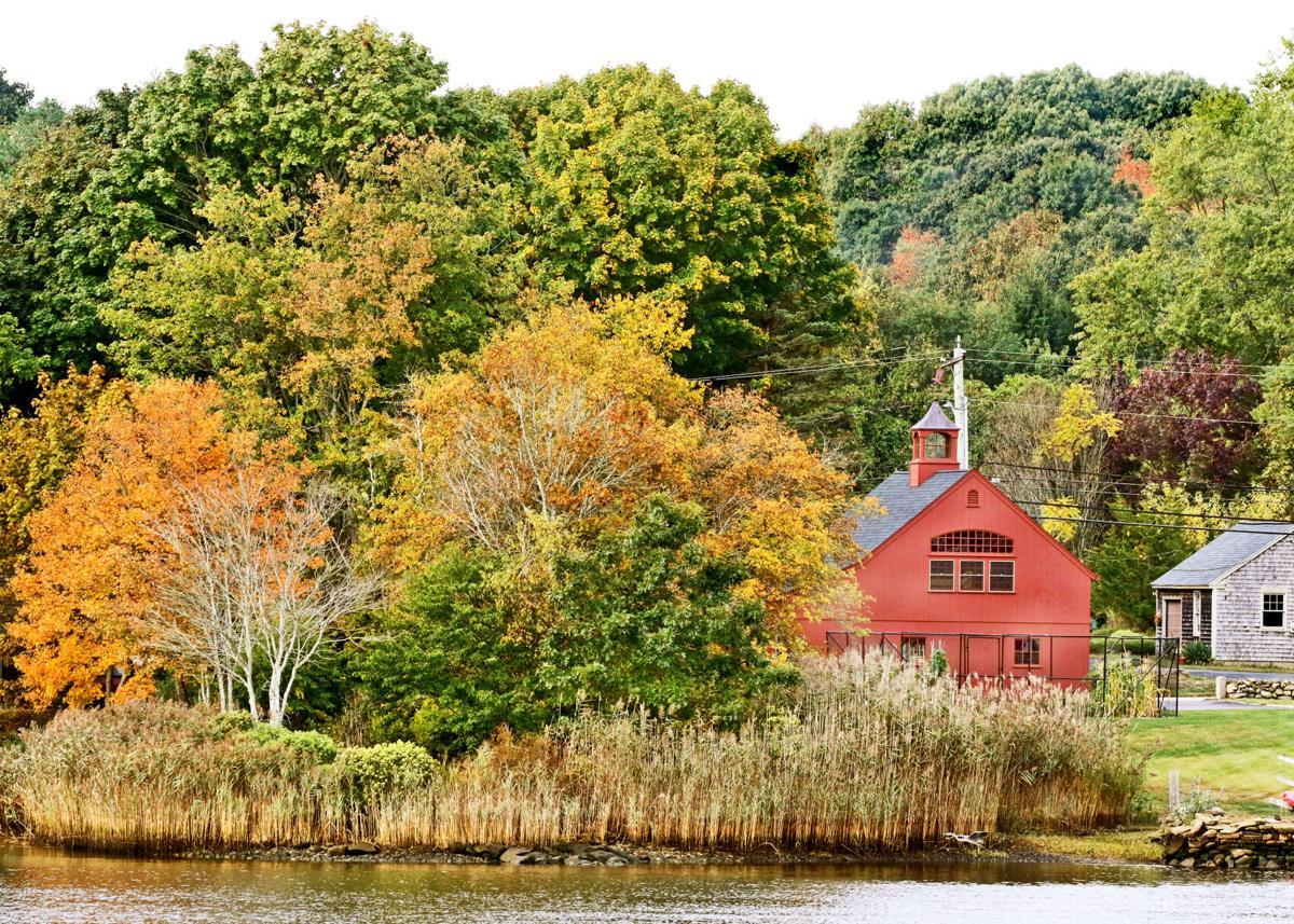 REG Autumnal foilage color 08769.JPG