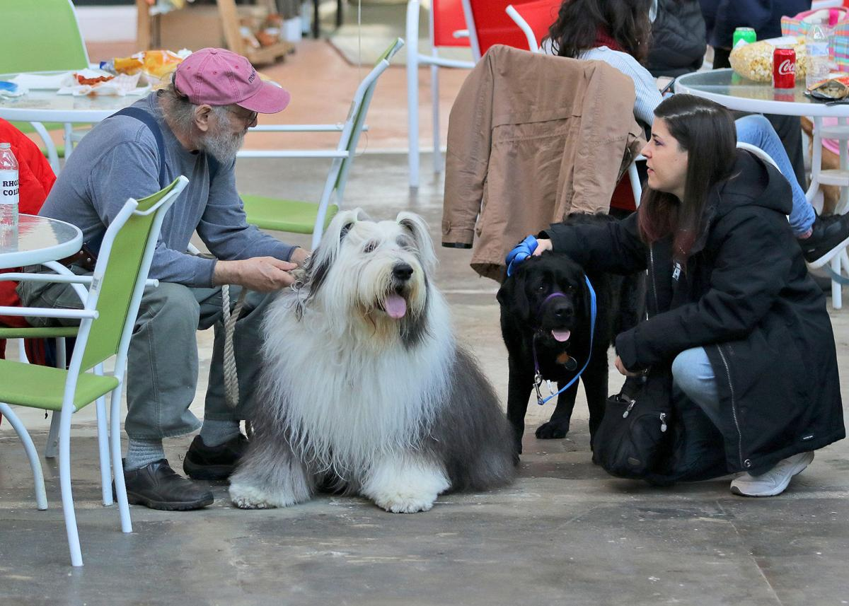 """It was a dog's day Sunday afternoon, March 1st, 2020 as over one hundred dog owners and their pooches, along with members of the dog-loving public, gathered at Stonington's Velvet Mill's Atrium to celebrate and recognize Dog Citizenry, a celebration of """"man and women's best friend"""". The first-ever event was sponsored by Rhodes Collar Dog Training in Mystic, CT. 
