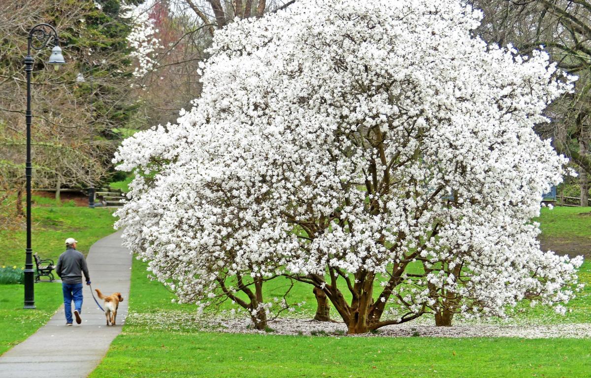 042119 WES Wilcox Park in Spring 335.JPG
