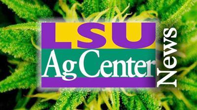 AgCenter News Header